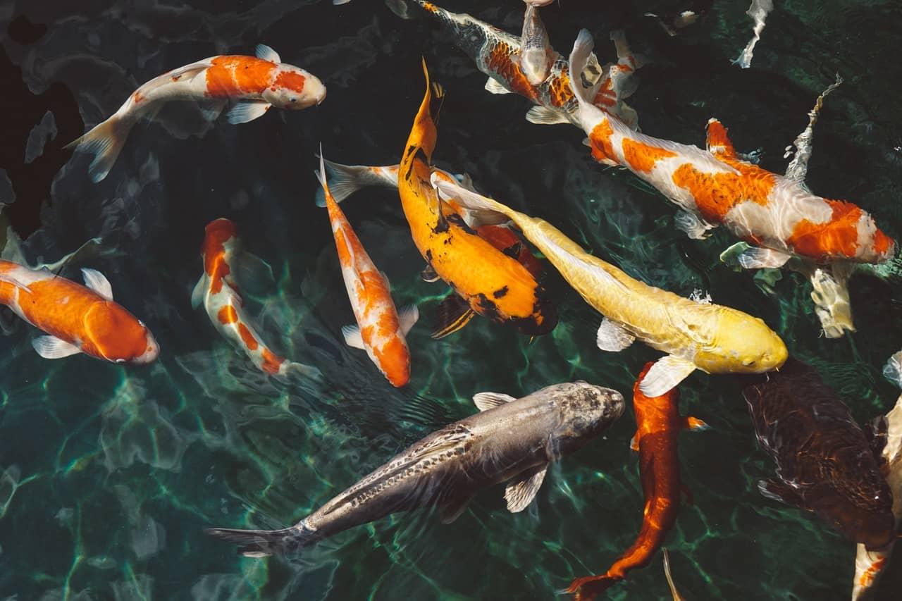 Fish Sale!!