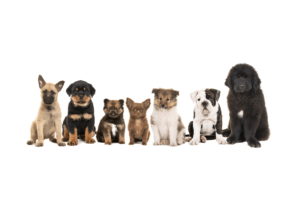 Dogs-and-Puppies-for-Sale