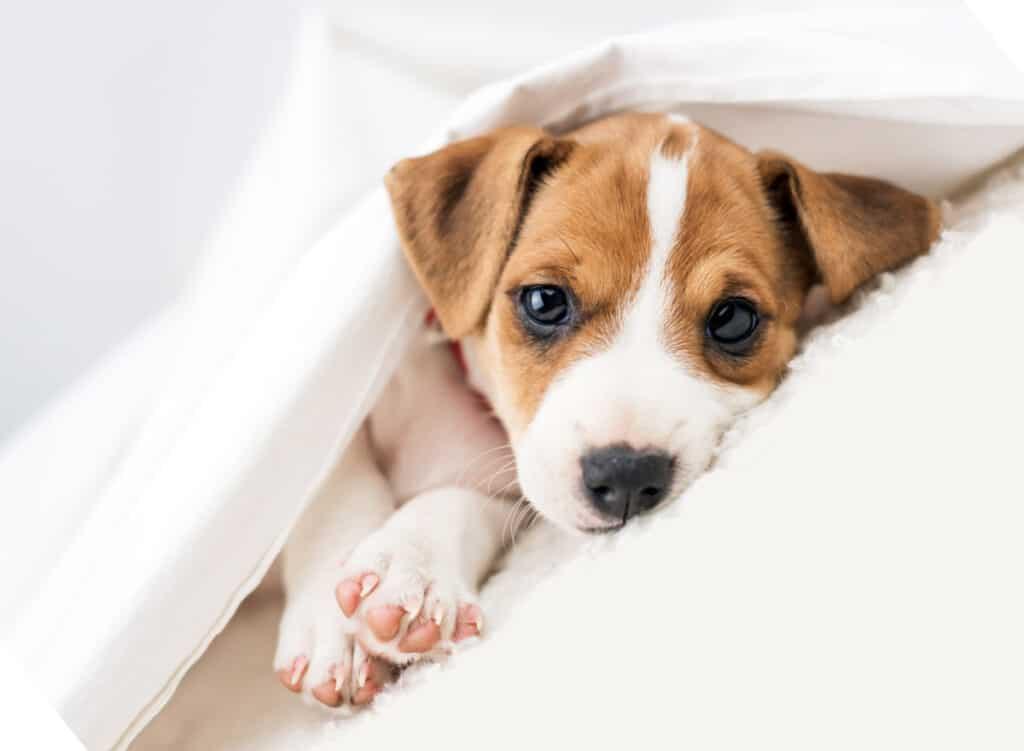 Pet-Adoption-near-me