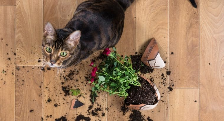 These indoor plants could harm your pet!