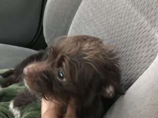 Rescued pup needs a home