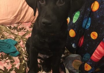 4month old male puppy needs forever home