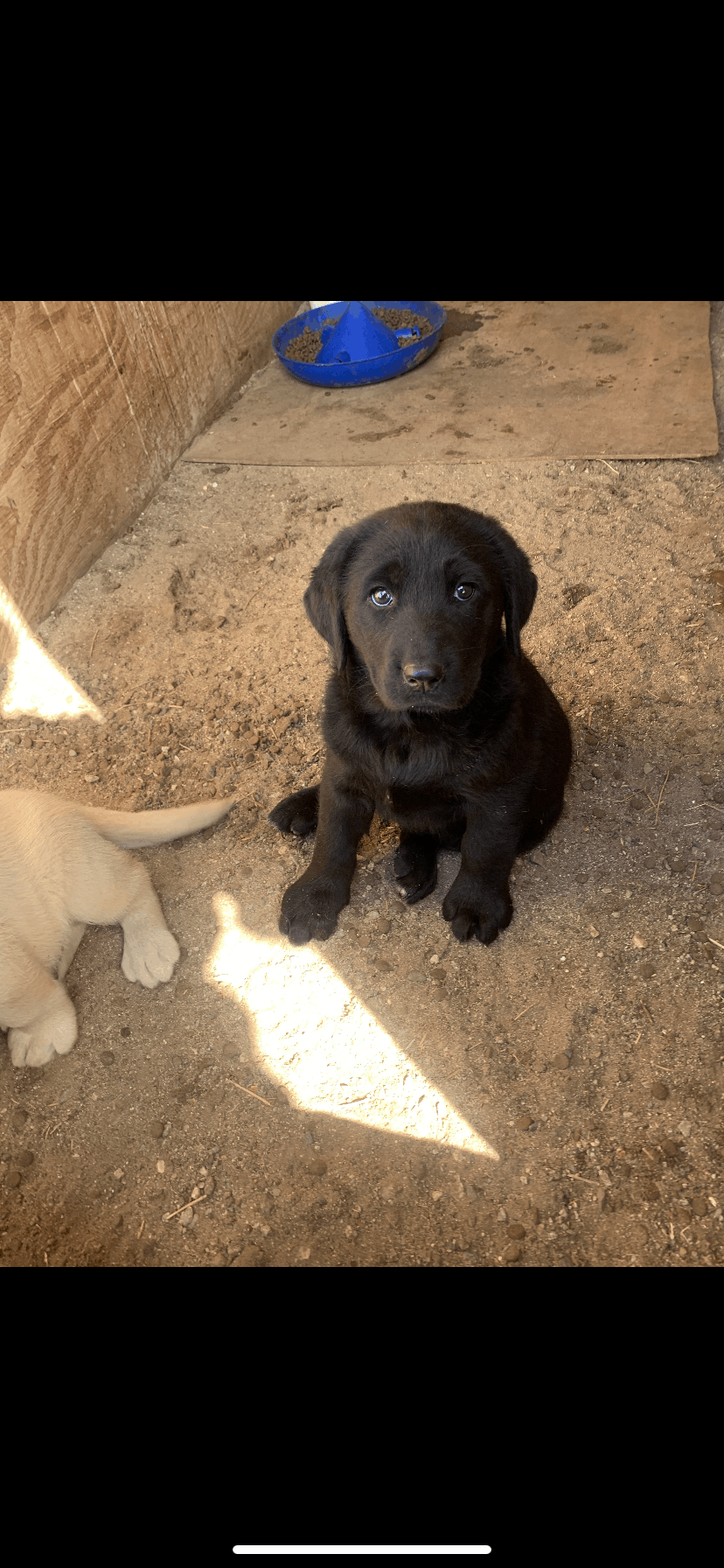 Female/male Puppy for sale