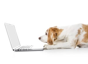 Best-places-to-sell-dogs-online