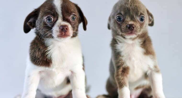 How to Sell Puppies Online