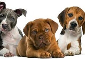 Best Pet Insurance Services