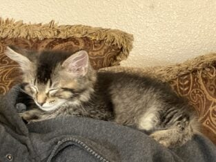 2 adorable kittens for a good home