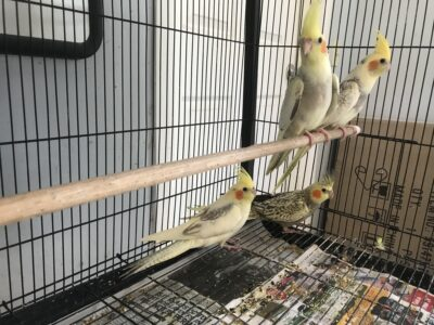 Young Birds
