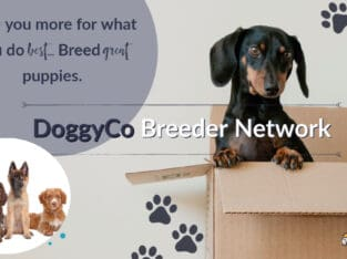 Online Puppy Listings – With Rewards!
