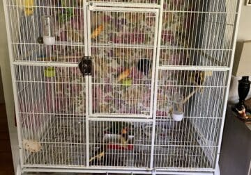 Canaries and their cage