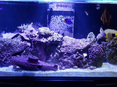 Red Sea Aquarium 165 Gallon Reefer tank