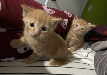 Kittens need rehoming