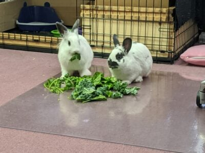 2 Bunnies with Lots of Extras