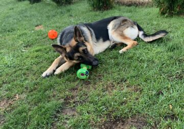 Dog looking for forever home