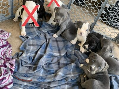 Sweet Puppies For Adoption