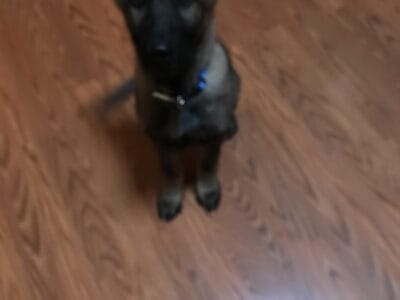 14 week puppy for sale !!!