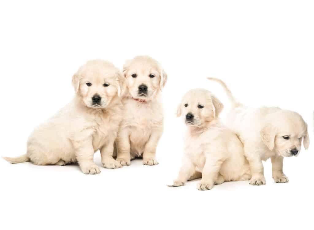 Free puppies near me
