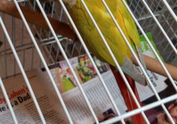 Beautiful conure and bird cage