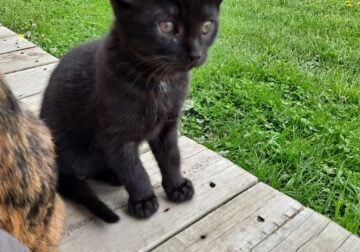 """PUMPKIN """"PIP SQUEAK"""" looking for forever home."""