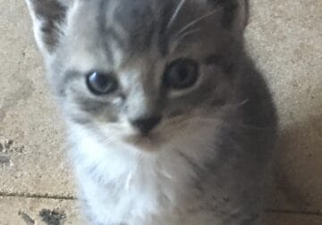 ADORABLE FREE KITTENS!!!