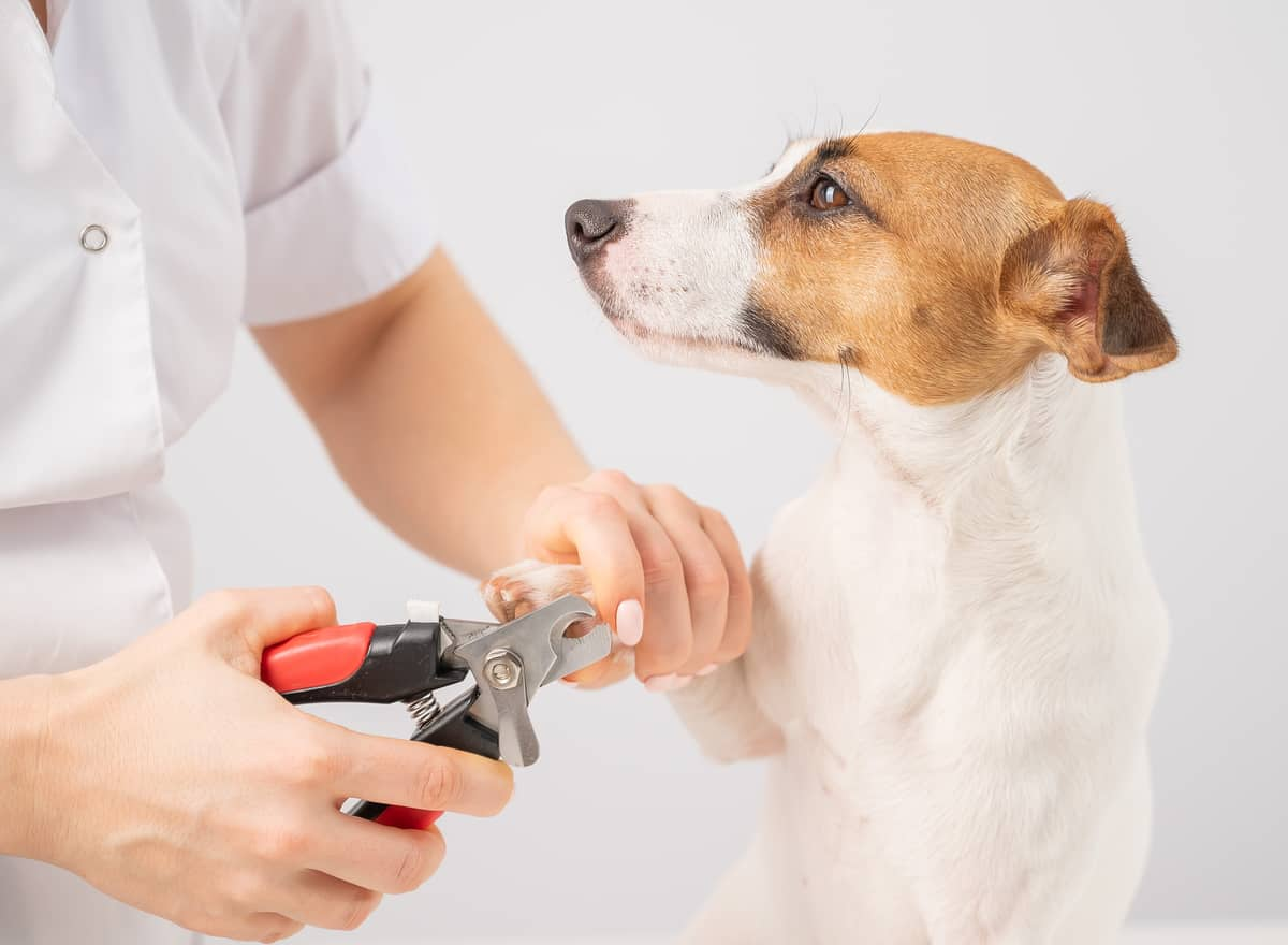 How-to-Clip Dog-Nails