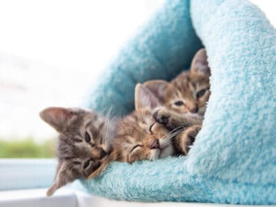 Sell Kittens & Cats online