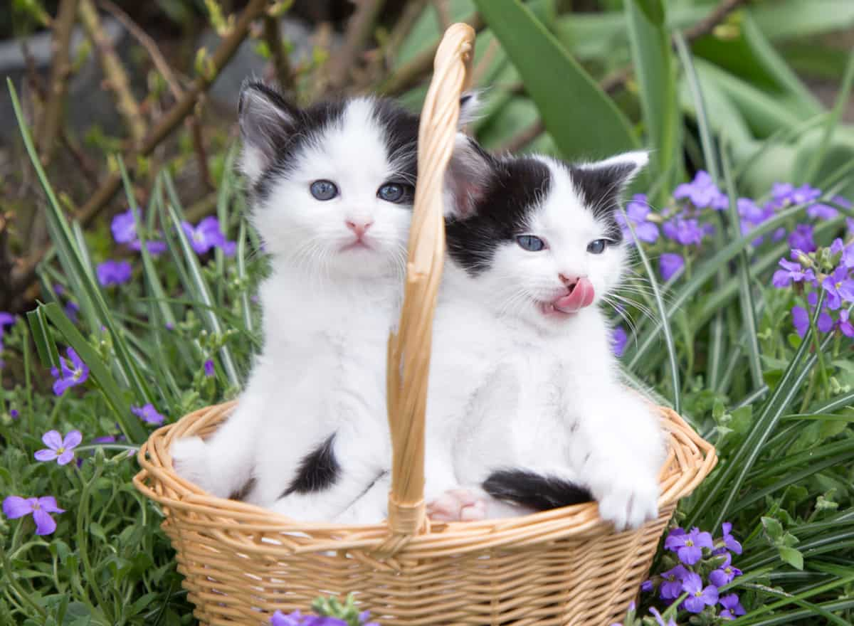 Two-Cats-Are-Better-Than-One
