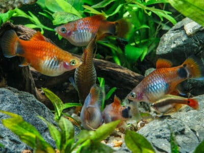 Sell Fishes Online