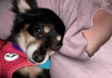 Sweet Chi mix needs a new home