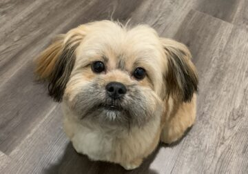 Selling a Cute Puppy