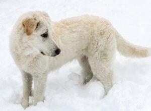 Healthy or sick puppy?
