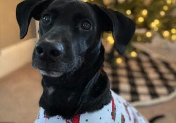 Friendly, loving, energetic pup needing a new home