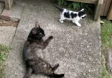 Mrs. Marbles – A lovely handicap Cat and kittens