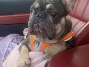 Looking for a forever home for Walter