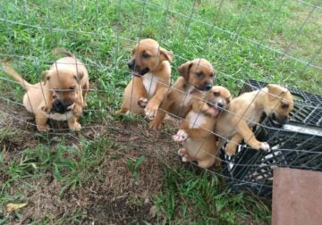 Free puppies 2 good home