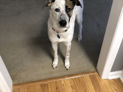 Need to re-home my 1yr old dog