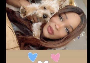 1 year old Pure bred Yorkie for sale