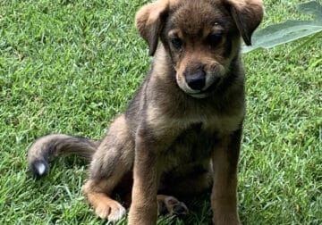 Abandoned Mixed Breed Puppy