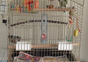 Rehoming My Quaker Parrot