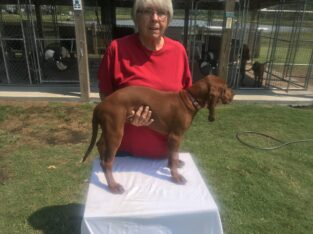 Redbone puppies for sale