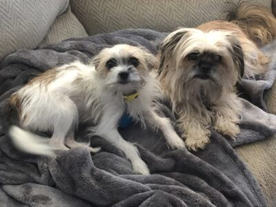 Bonded female pair (Mother/daughter) needs rehomed
