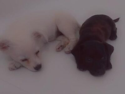 TWO STRAYS DESPERATE NEED FOR A HOME