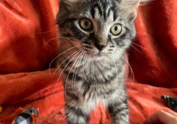 Looking for a home for a kitten(s)