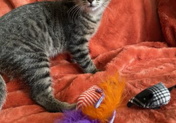 Looking for a home for kitten(s)
