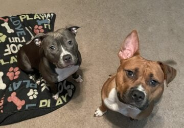 Cali and Ace