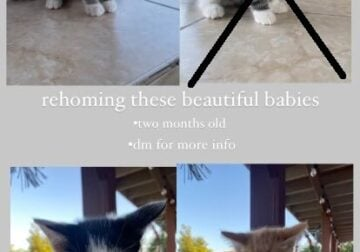 3 FREE KITTENS NEED A HOME